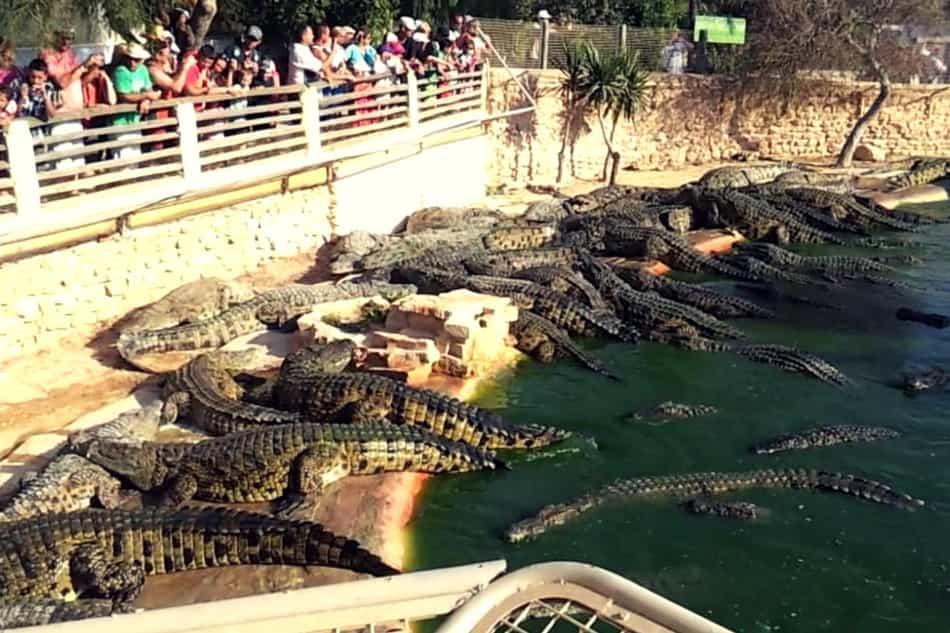 crocod'ile