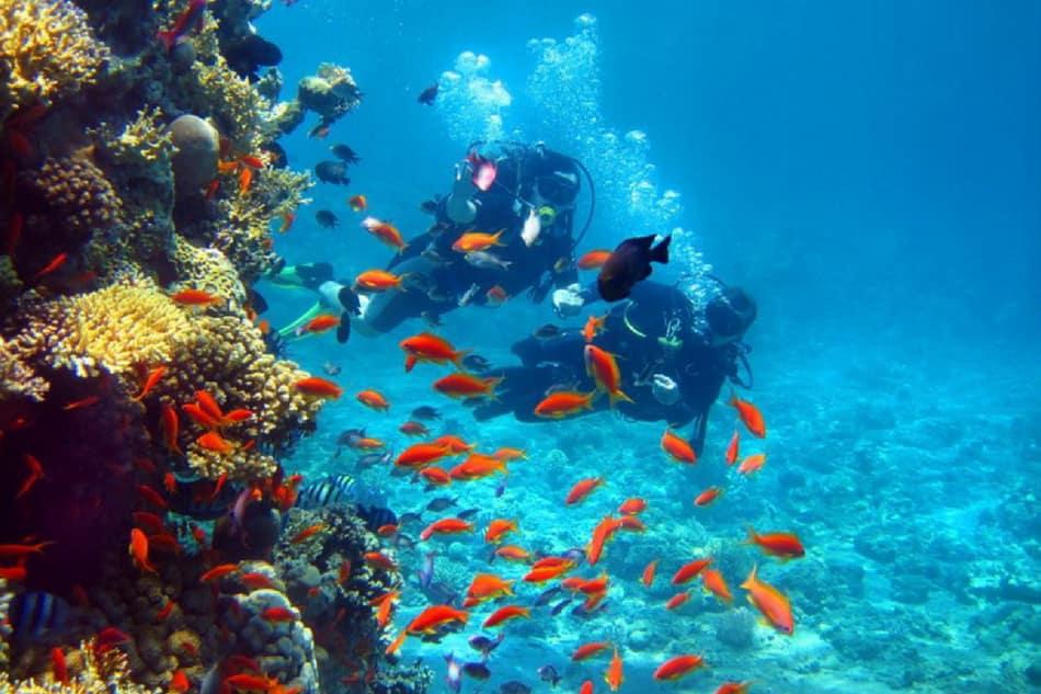 plongée sous marine djerba