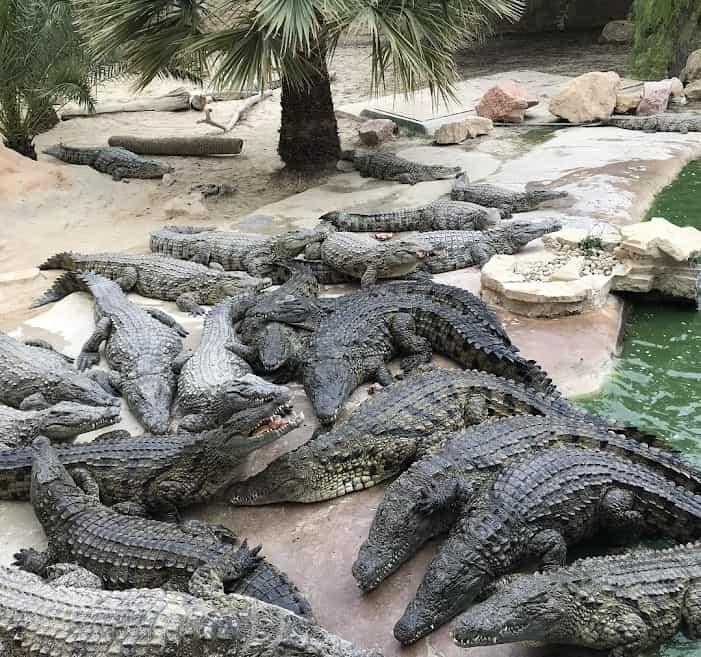 Djerba explore park ferme crocodile