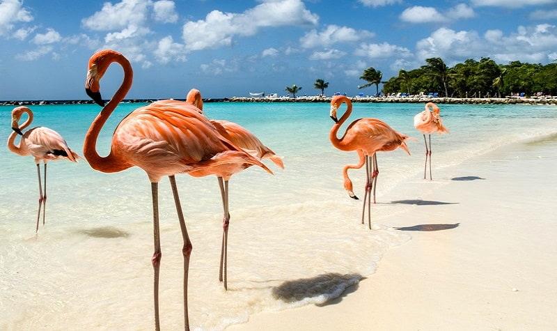 Aruba voyage de noces